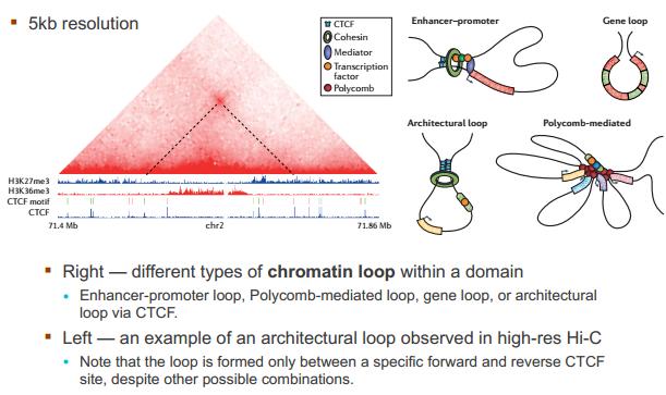 3D 基因组与生物信息