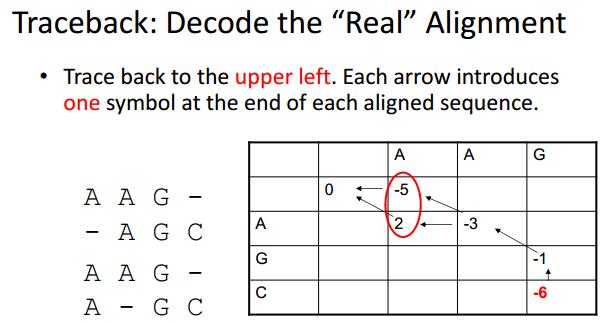 序列比对与动态规划