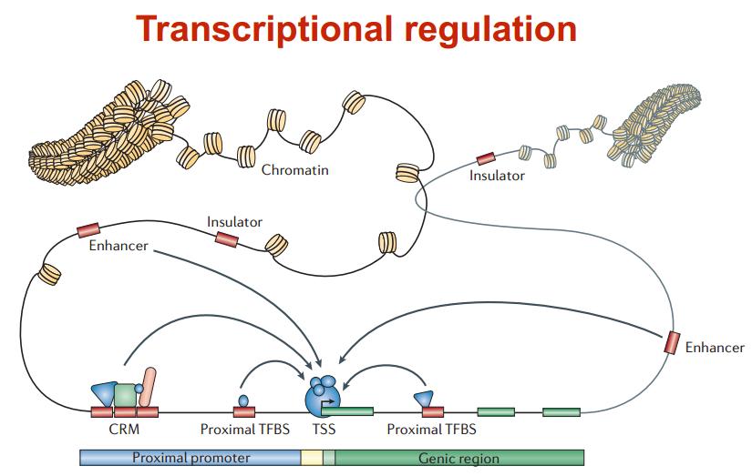 转录调控与生物信息