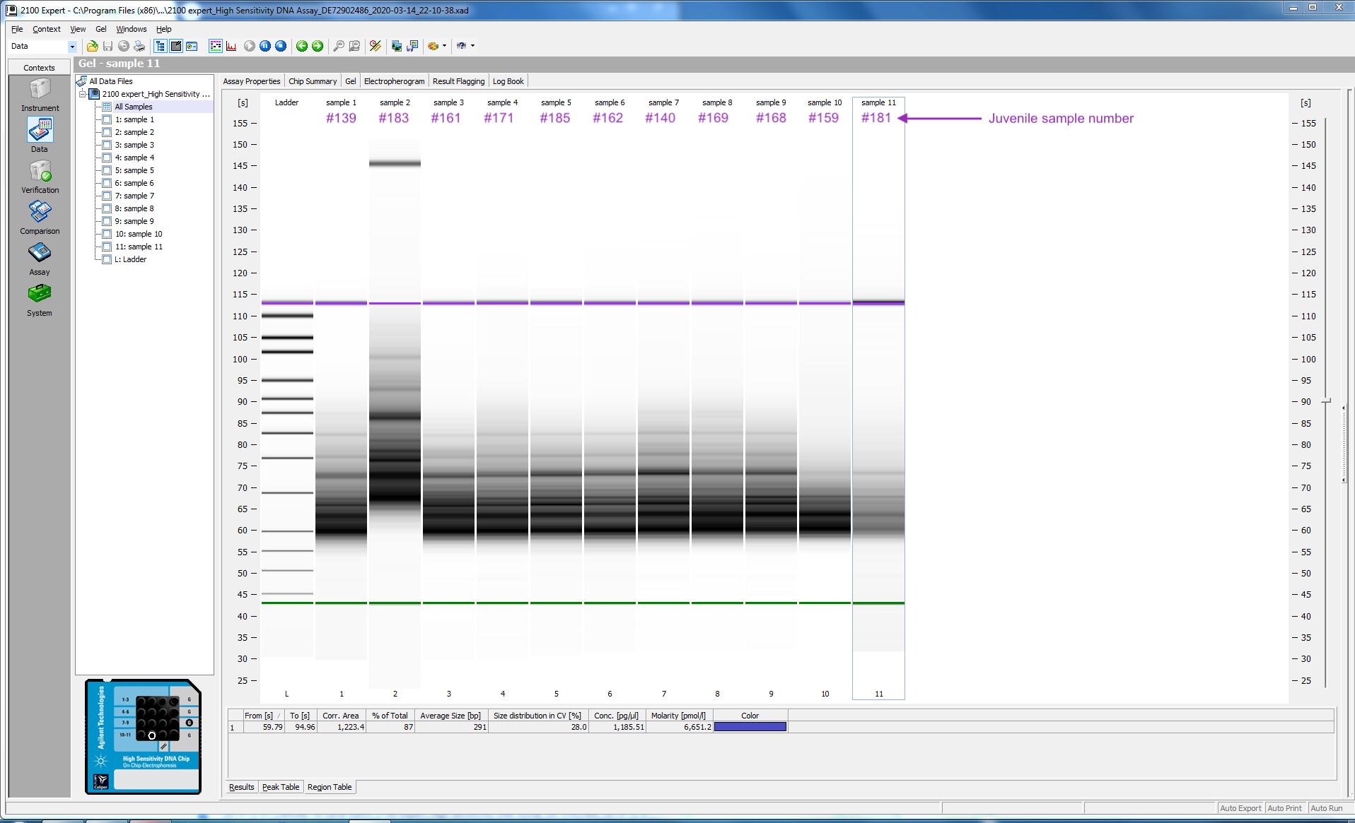 2020-03-14_quantseq-juvenile_dsDNA-libraries-gels