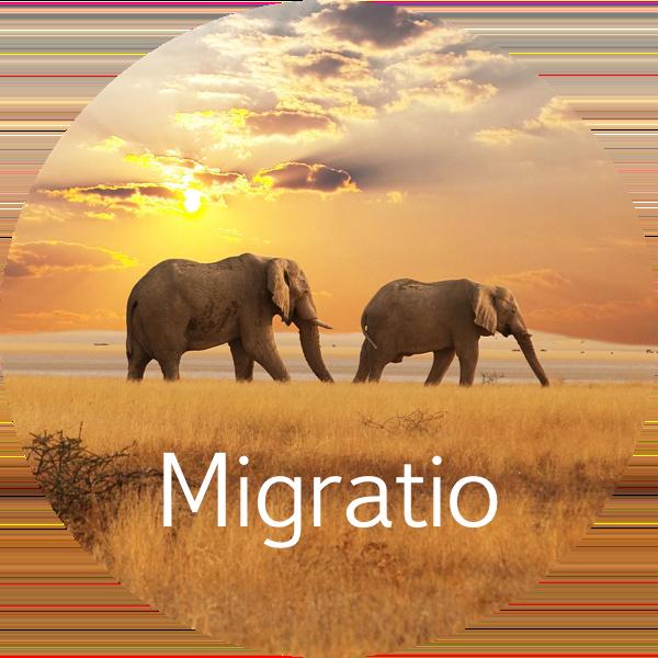 migratio