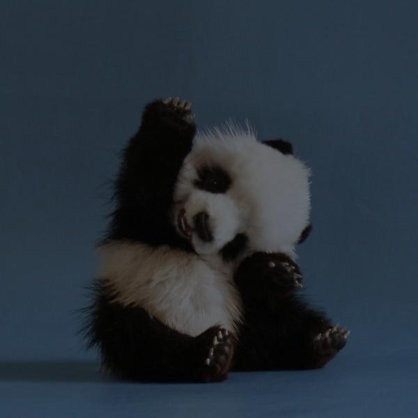 Тъмна панда
