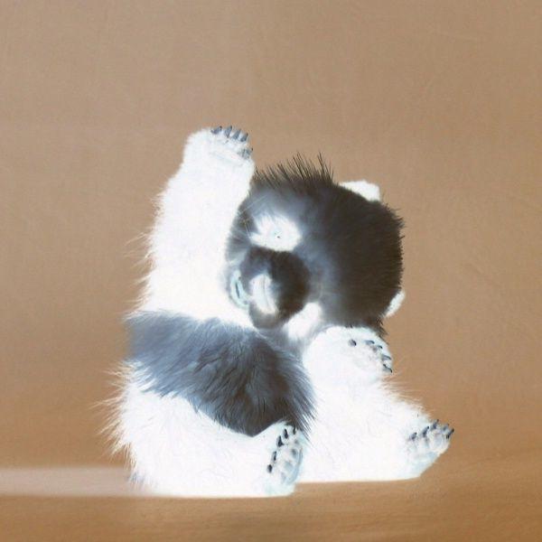 Негатив на панда