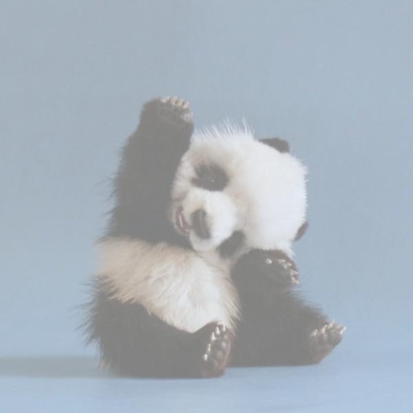 Светла панда