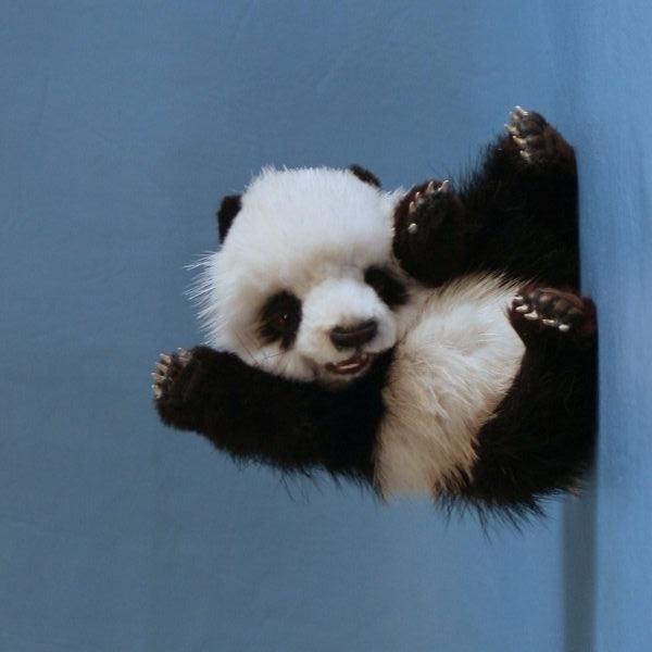 Завъртяна на ляво панда