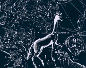 Constellation Girafe