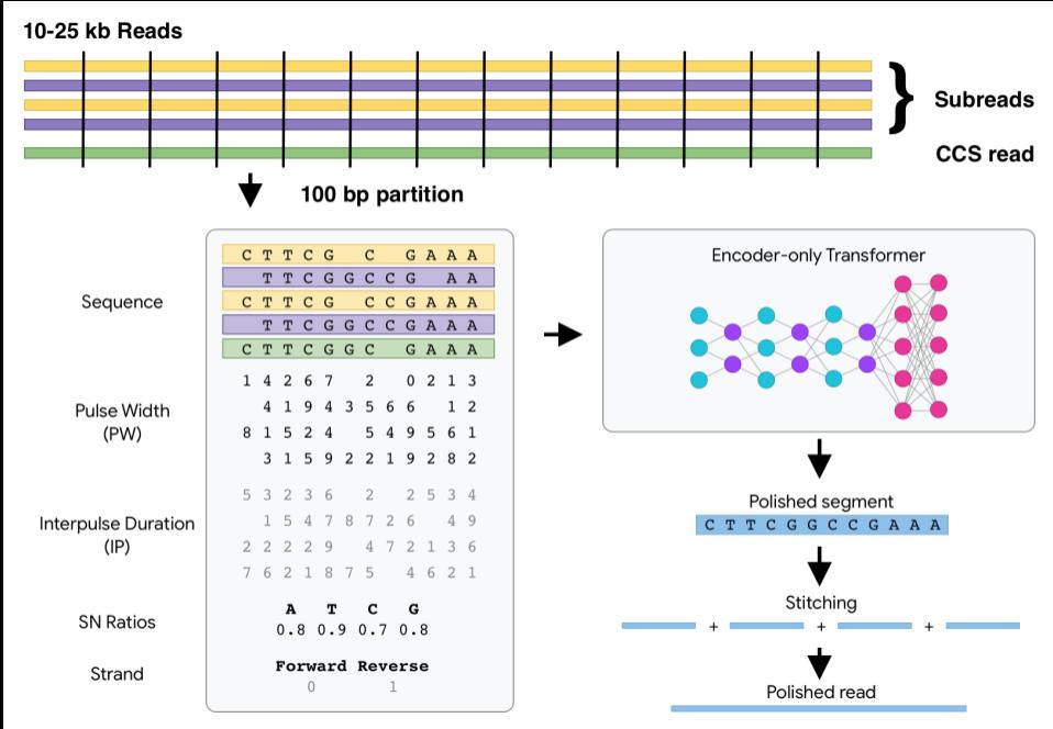 DeepConsensus overview diagram