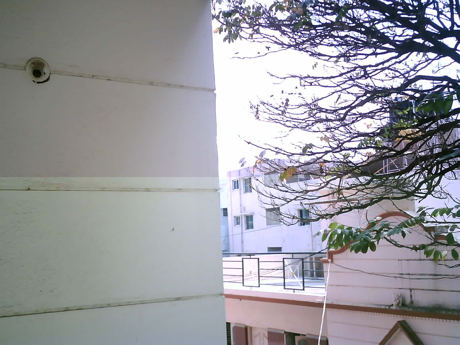 Outdoor Image for White balance adjustment