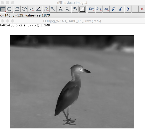 Image Imported into ImageJ