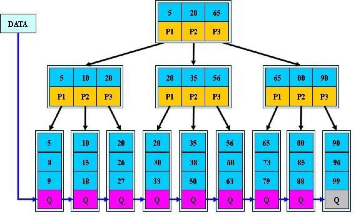 一颗 B+ 树