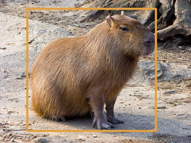 Capybara TFLite detection