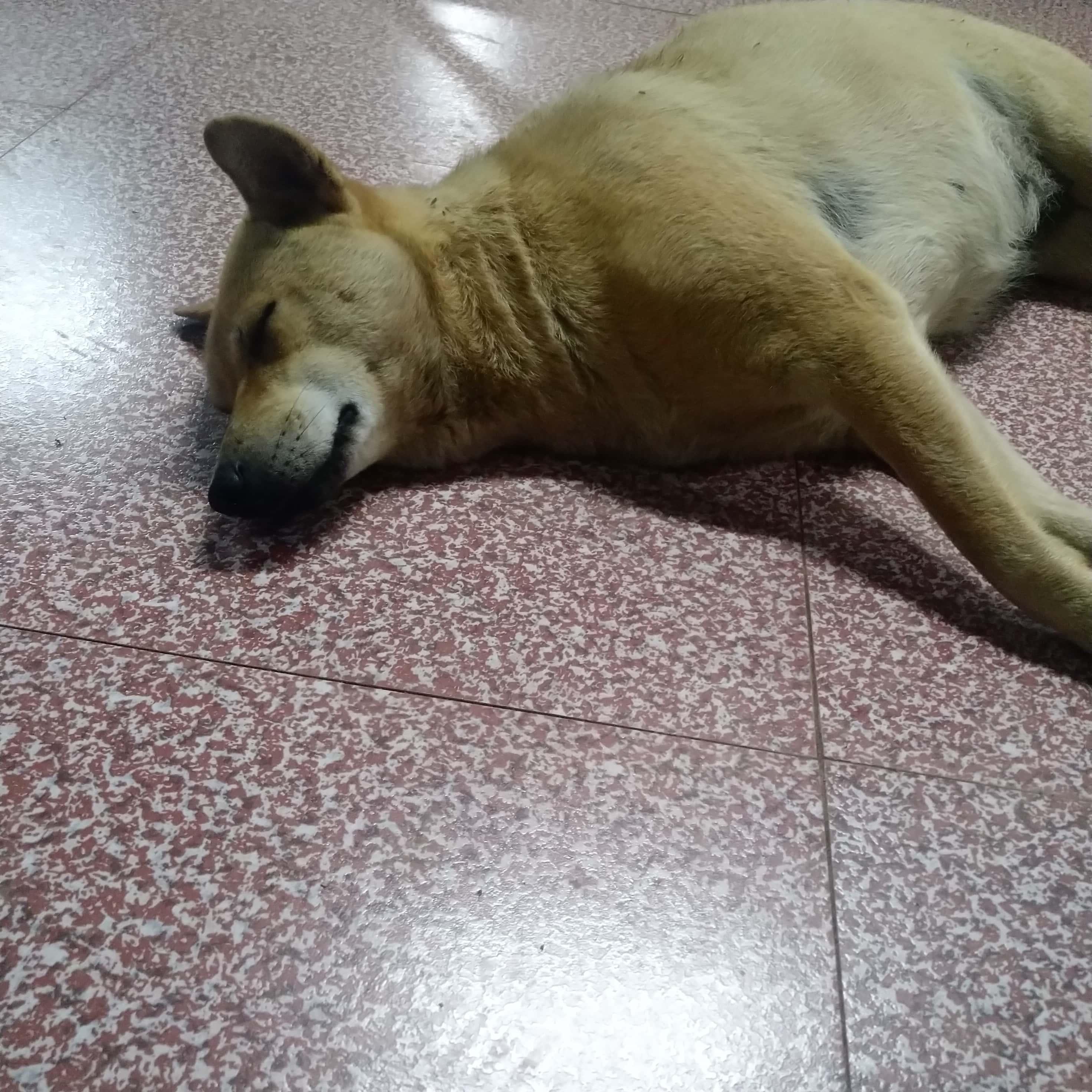 看狗困的 2