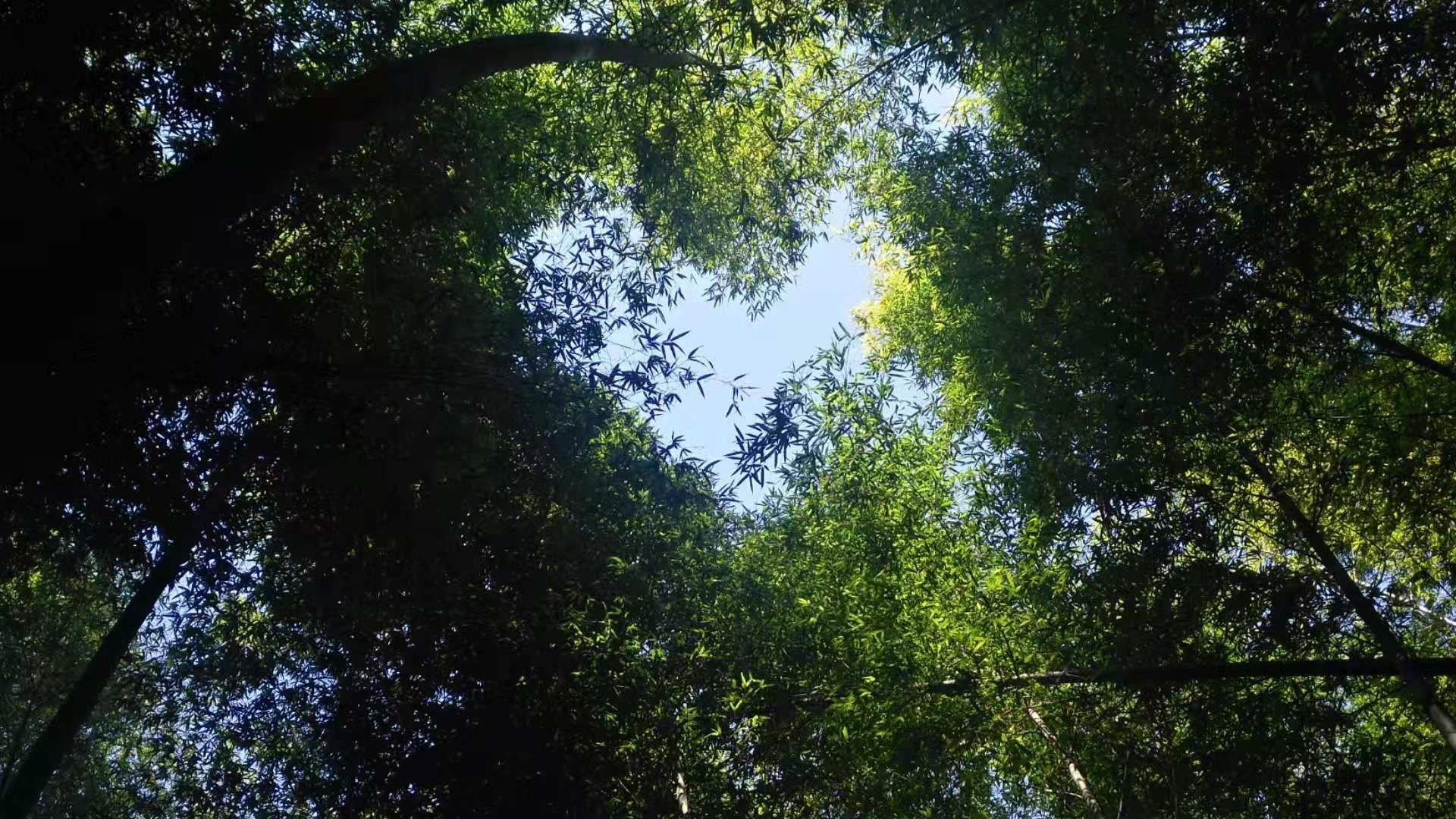 心形的竹林空隙