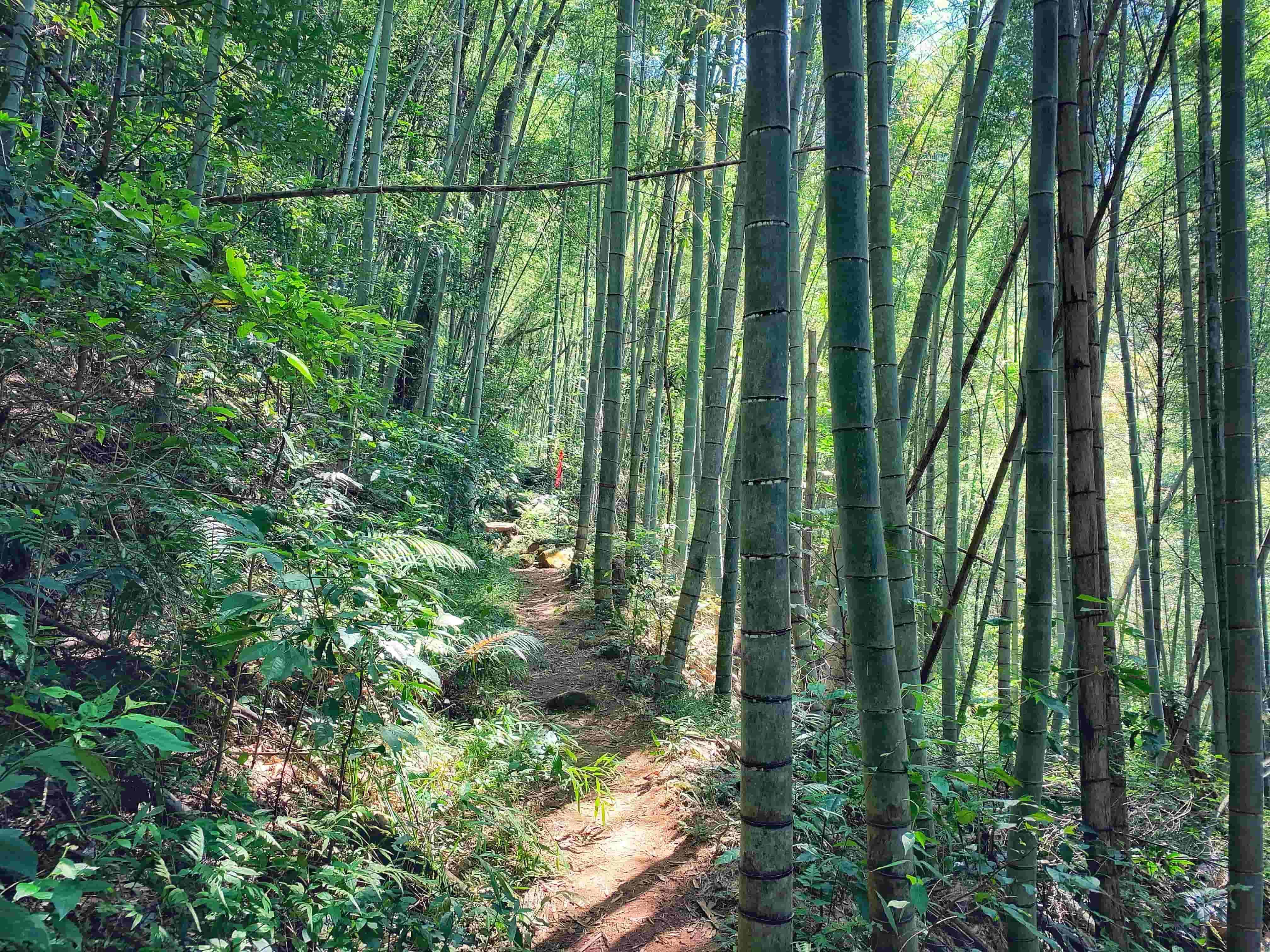 竹林间的小路