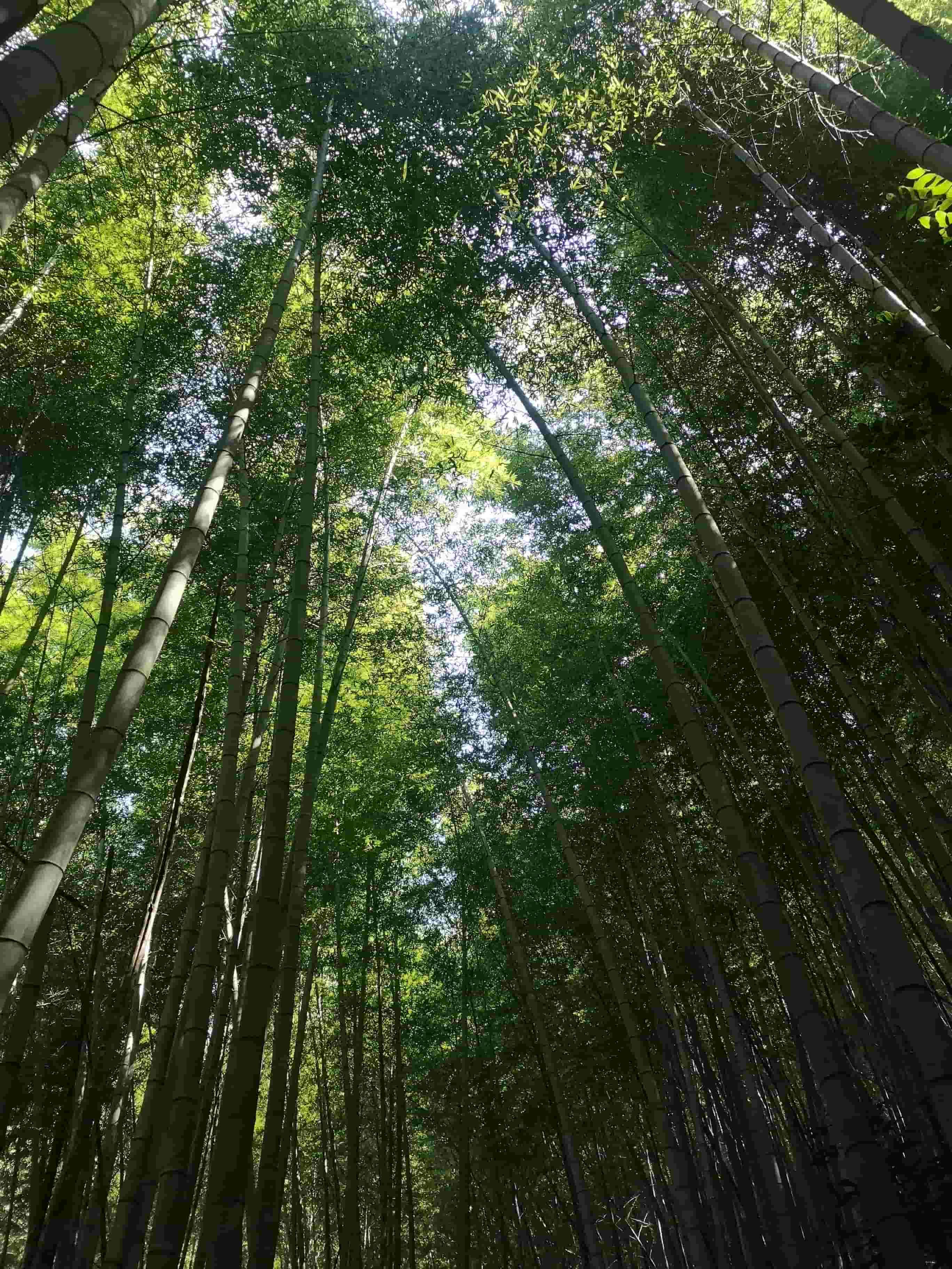 下山遇到的竹林