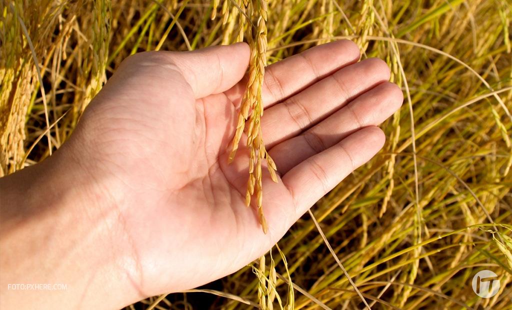 S4 se une a IBM Food Trust para reducir la pérdida de alimentos y el riesgo climático y productivo en la agroindustria