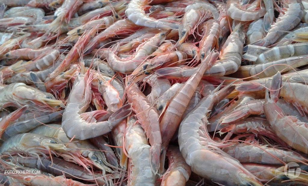 El camarón sabe más dulce con trazabilidad basada en blockchain