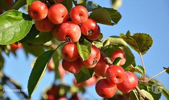 Emprendedores crean forma de monitoreo personalizado para la conservación de la fruta