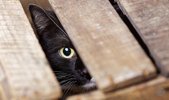 Aquí hay gato encerrado. Kaspersky alerta sobre el adware preinstalado en los móviles