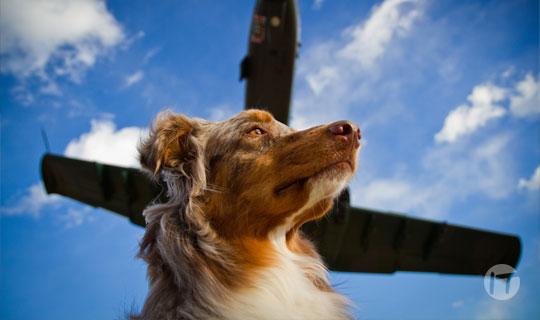 Digi-Pet by Unisys: la nueva solución para monitorear a las mascotas