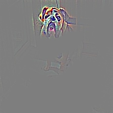 cat_dog_242_guided_gradcam.jpg