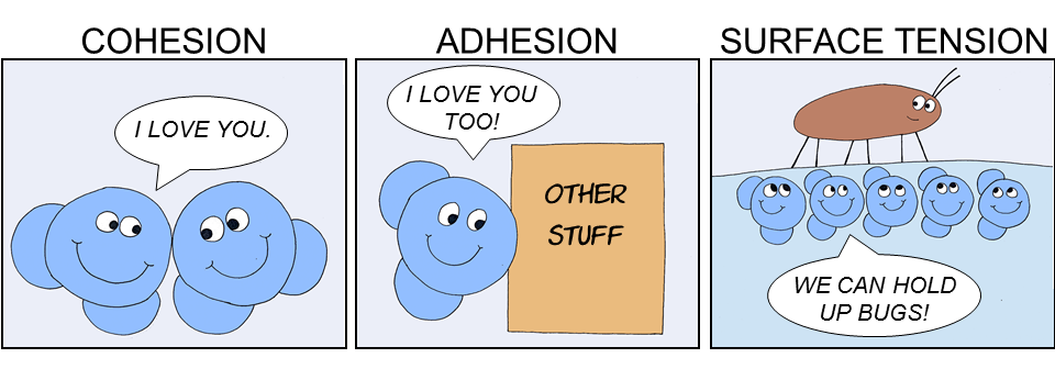 Water's properties of cohesion, adhesion, and surface tension.