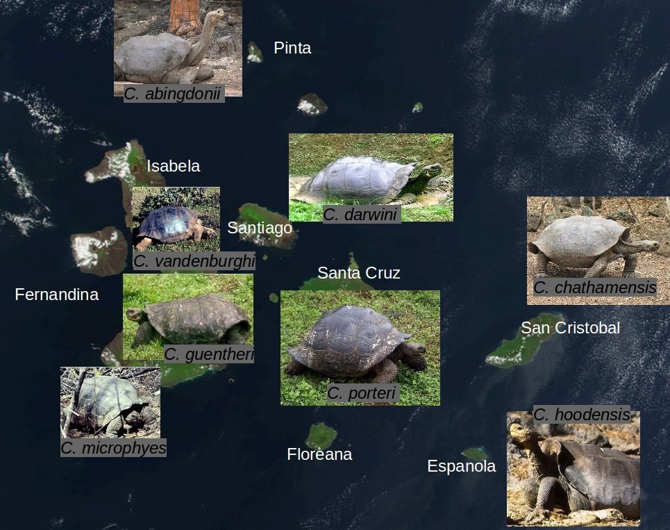 Tortoise Diversity