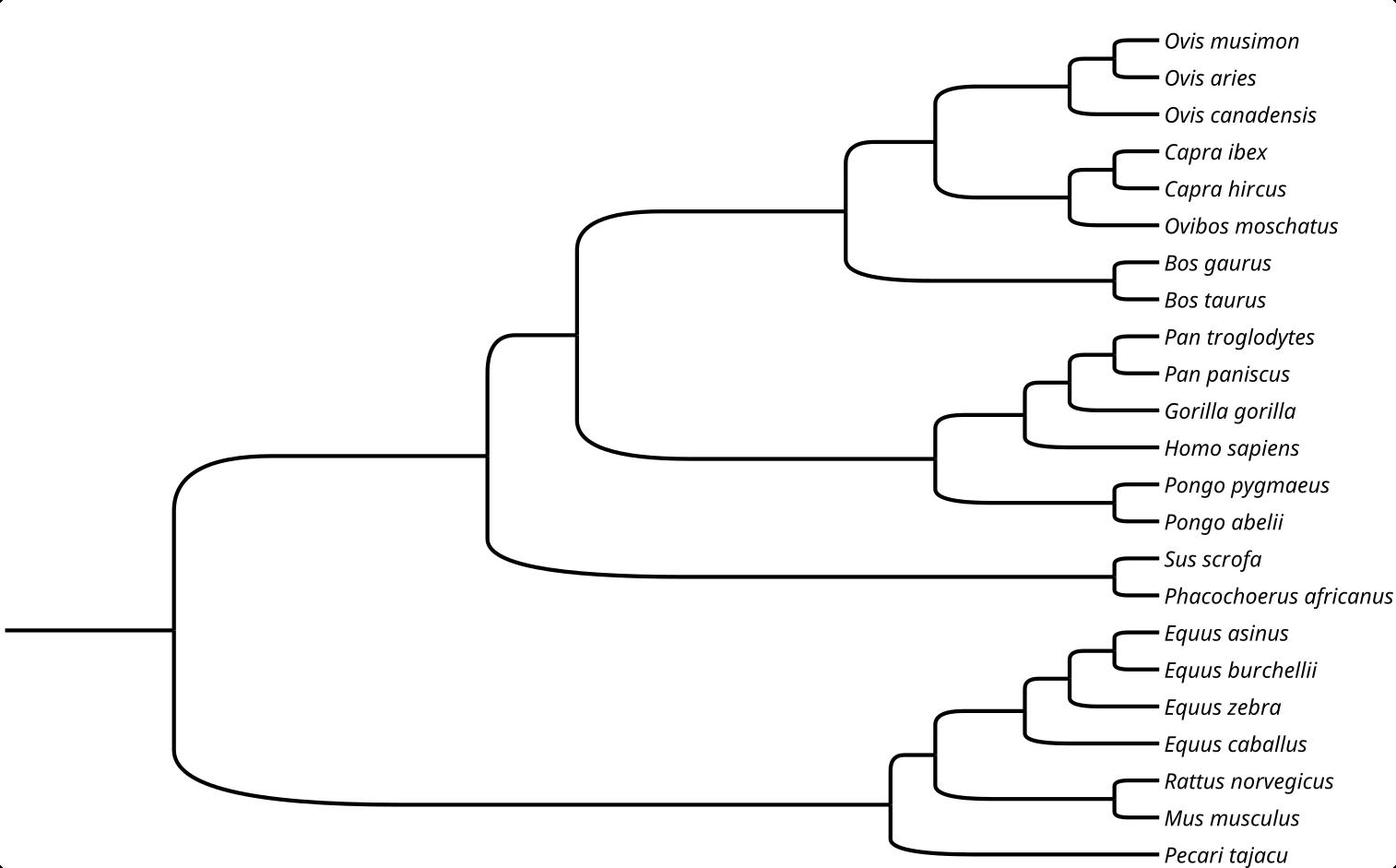 Tree of Mammalian COI