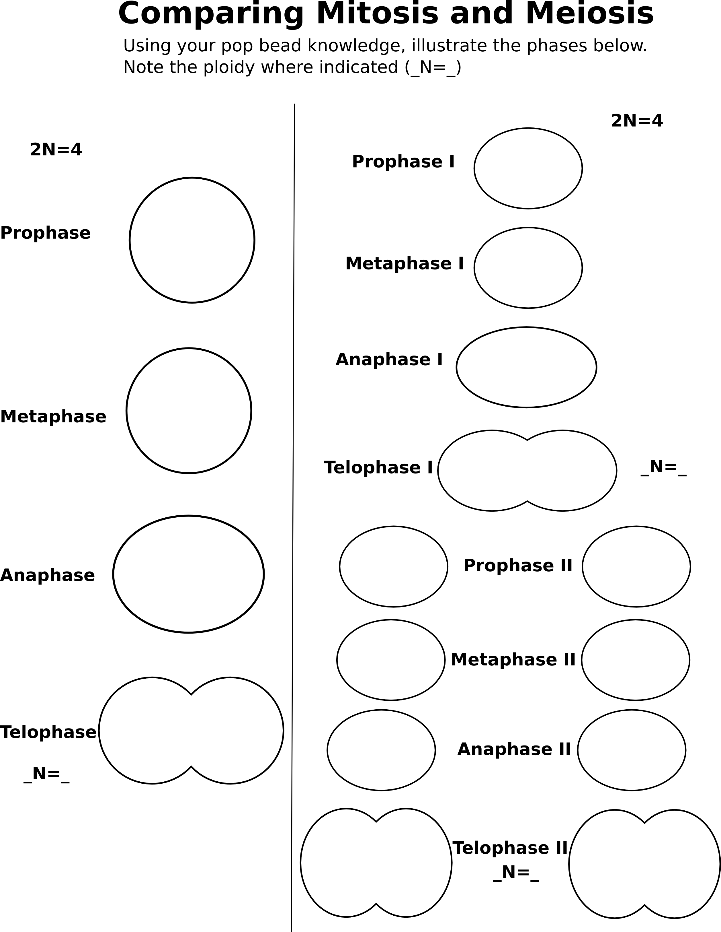 compare-cell-division