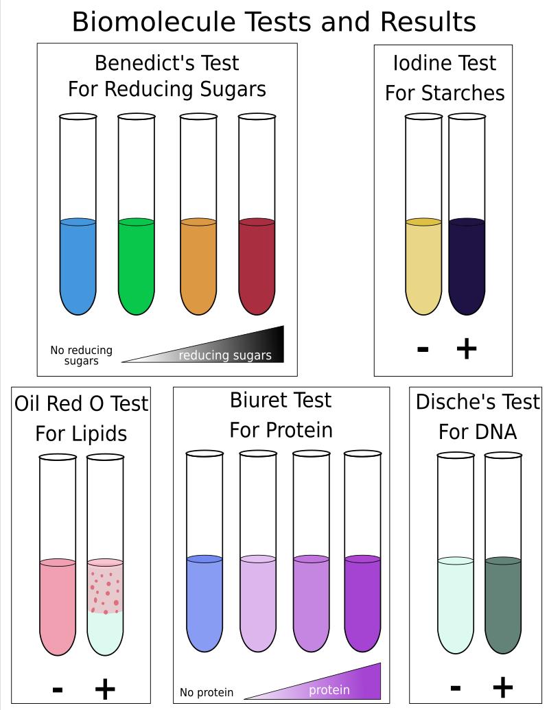 Biomolecule Tests