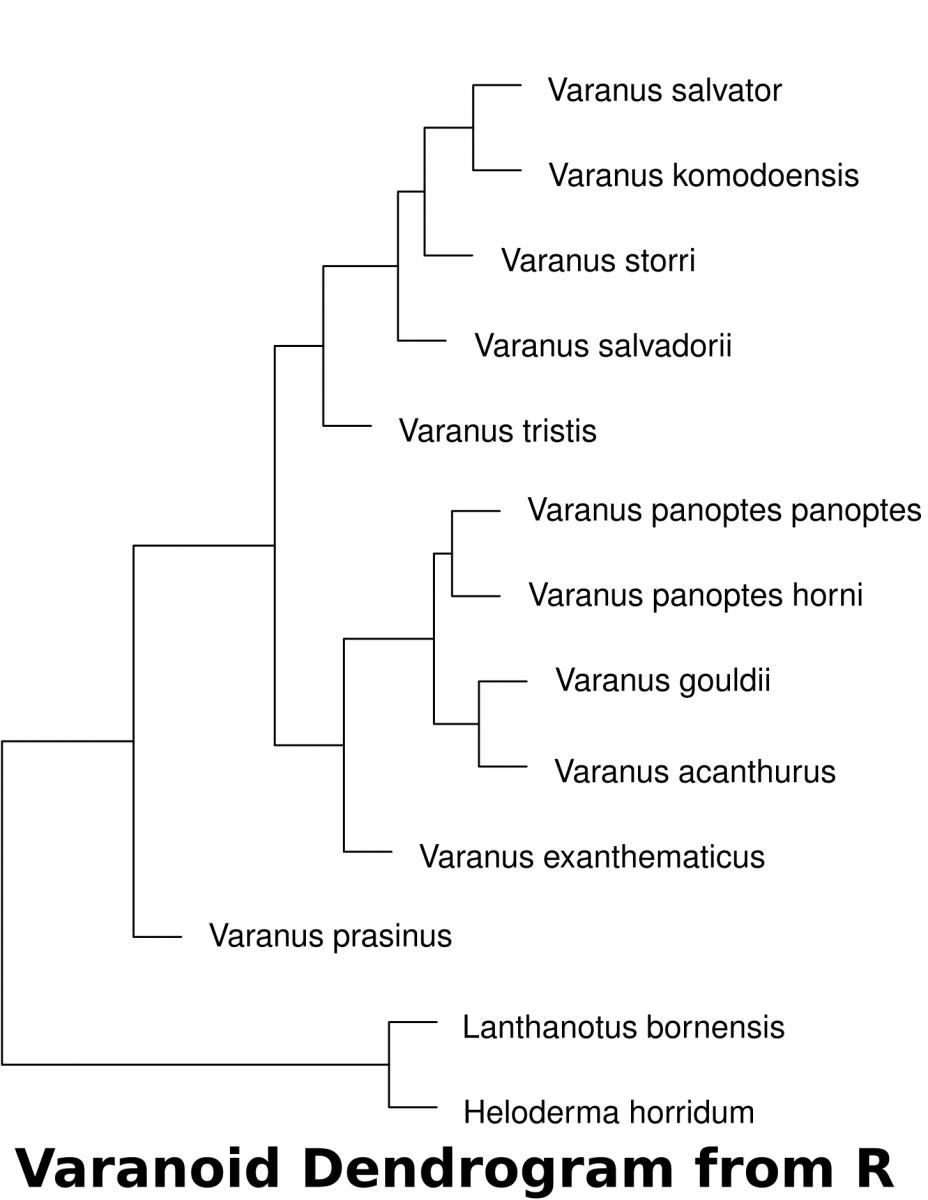 5  Morphometic Analysis - Biology LibreTexts