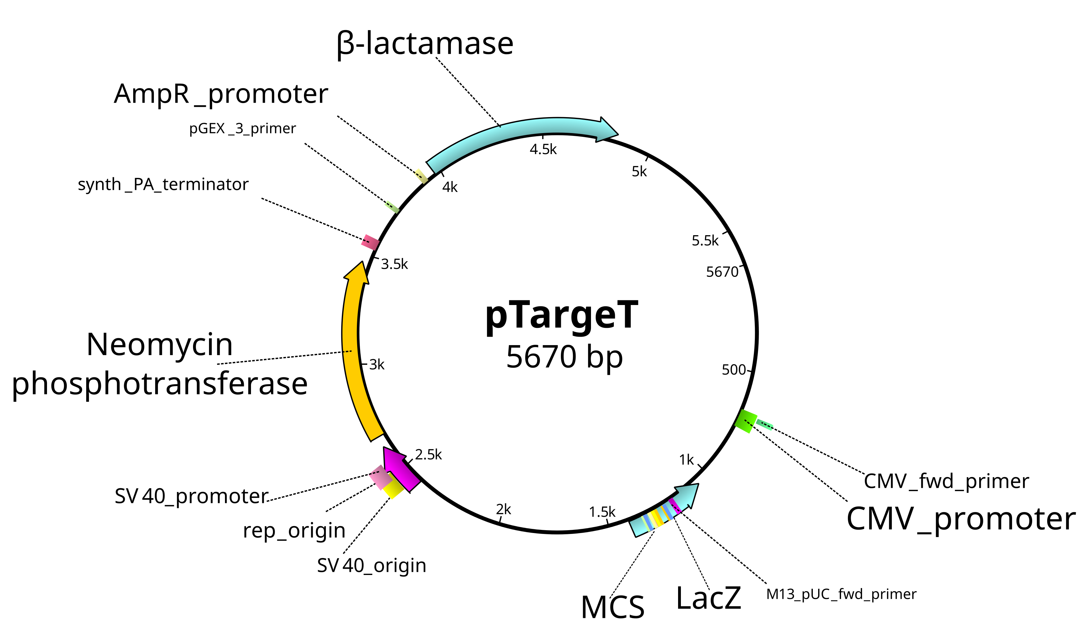 pTarget mammalian expression vector