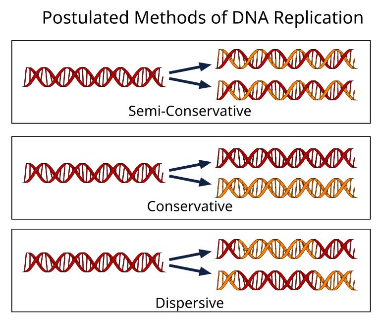 postulate replication