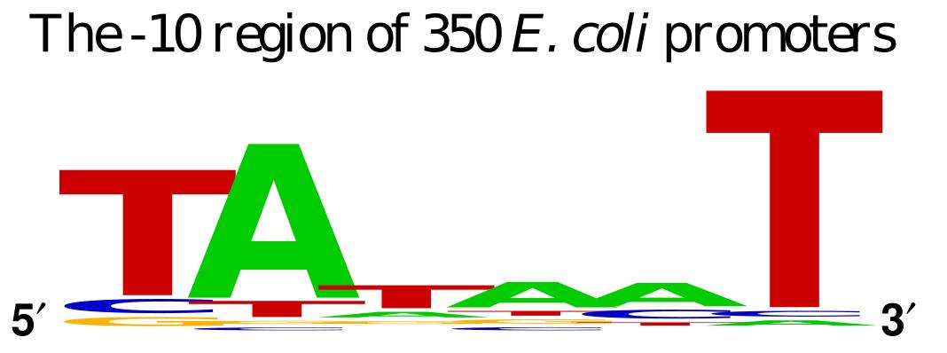 Pribnow box of E. coli (-10 of transcriptional start)