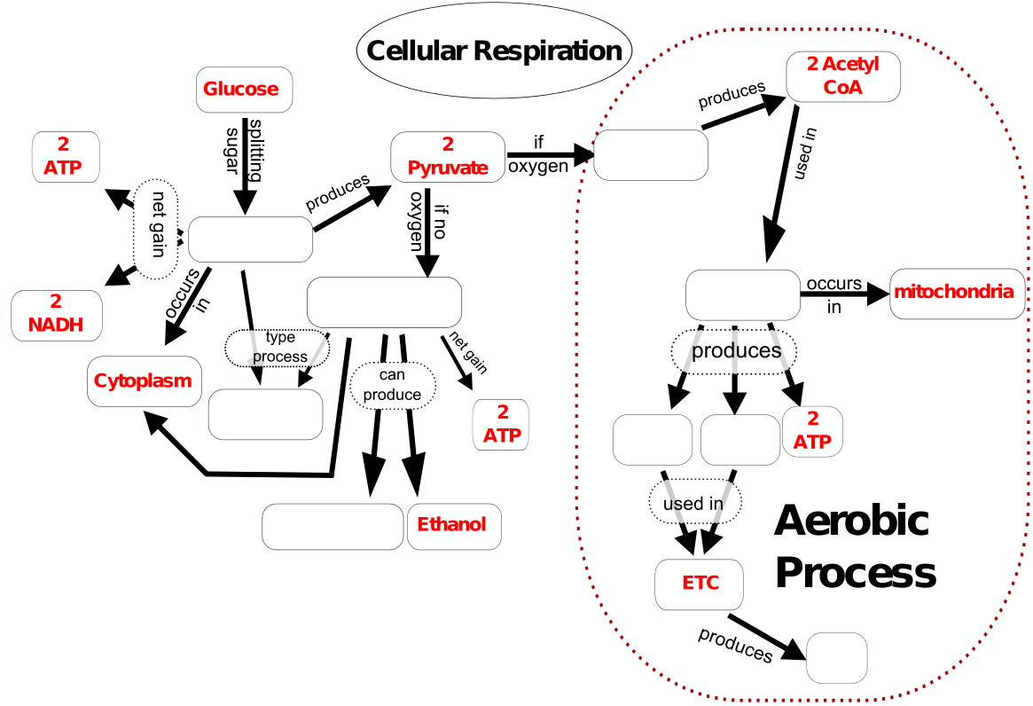 cellrespiration