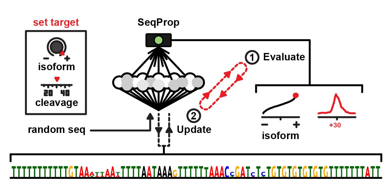 SeqProp Logo