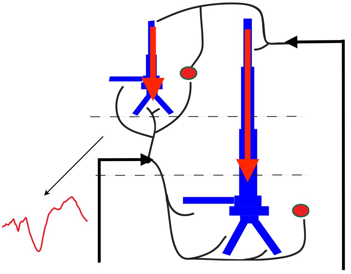 synaptic-connectivity