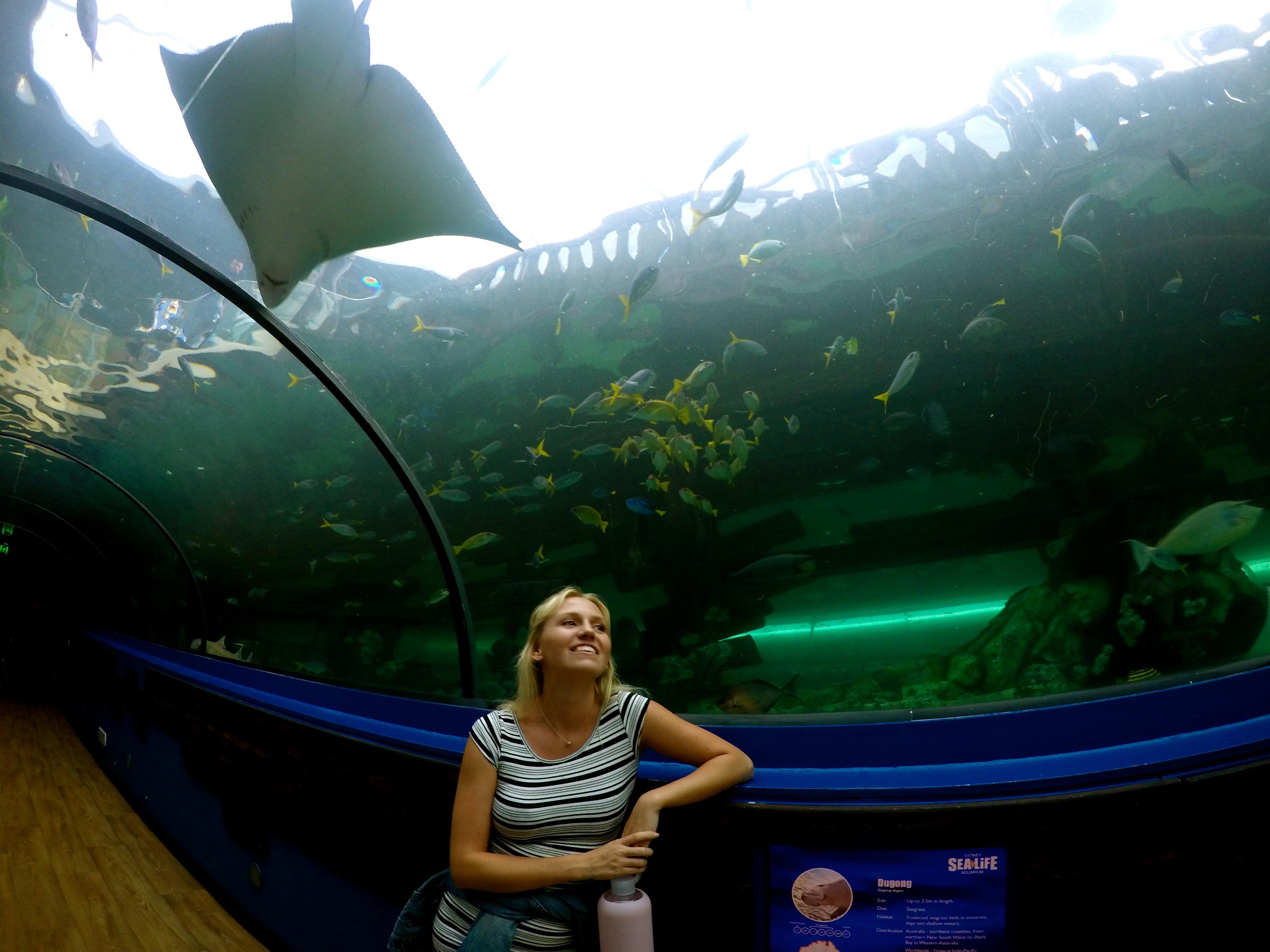 lolFish