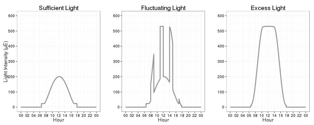 Excess, sufficient and dynamic light conditions