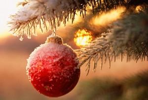 Оголосили вихідні на зимові свята