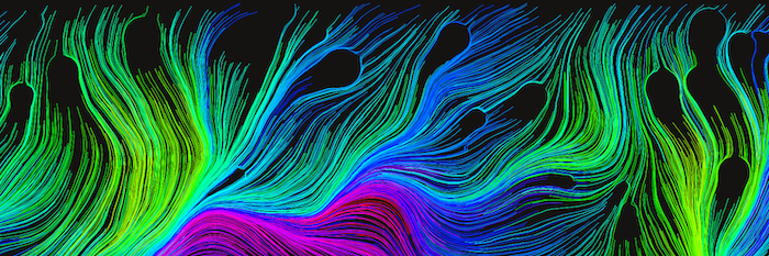 Flow fields with distortions