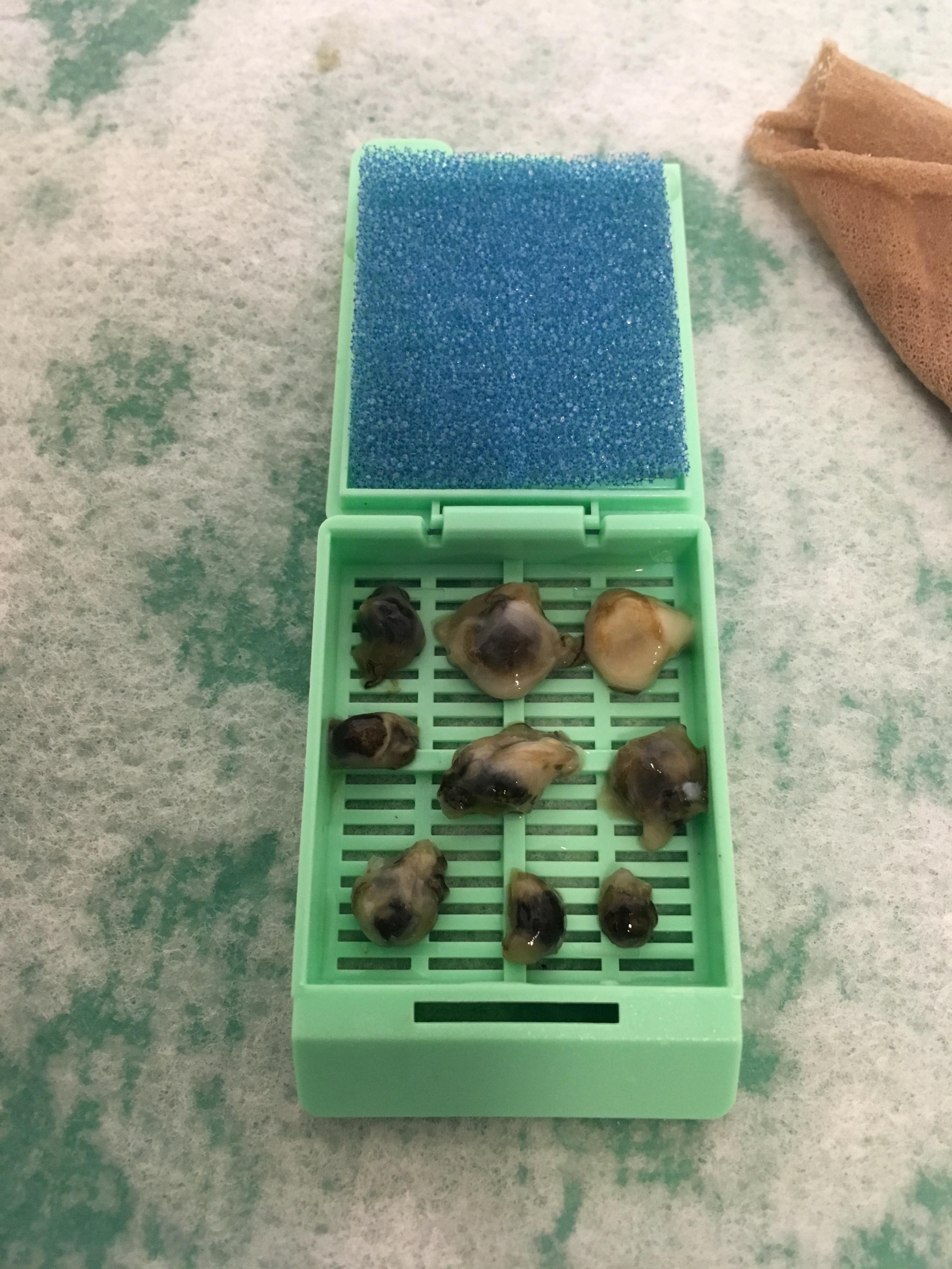 k-6 samples in cassette
