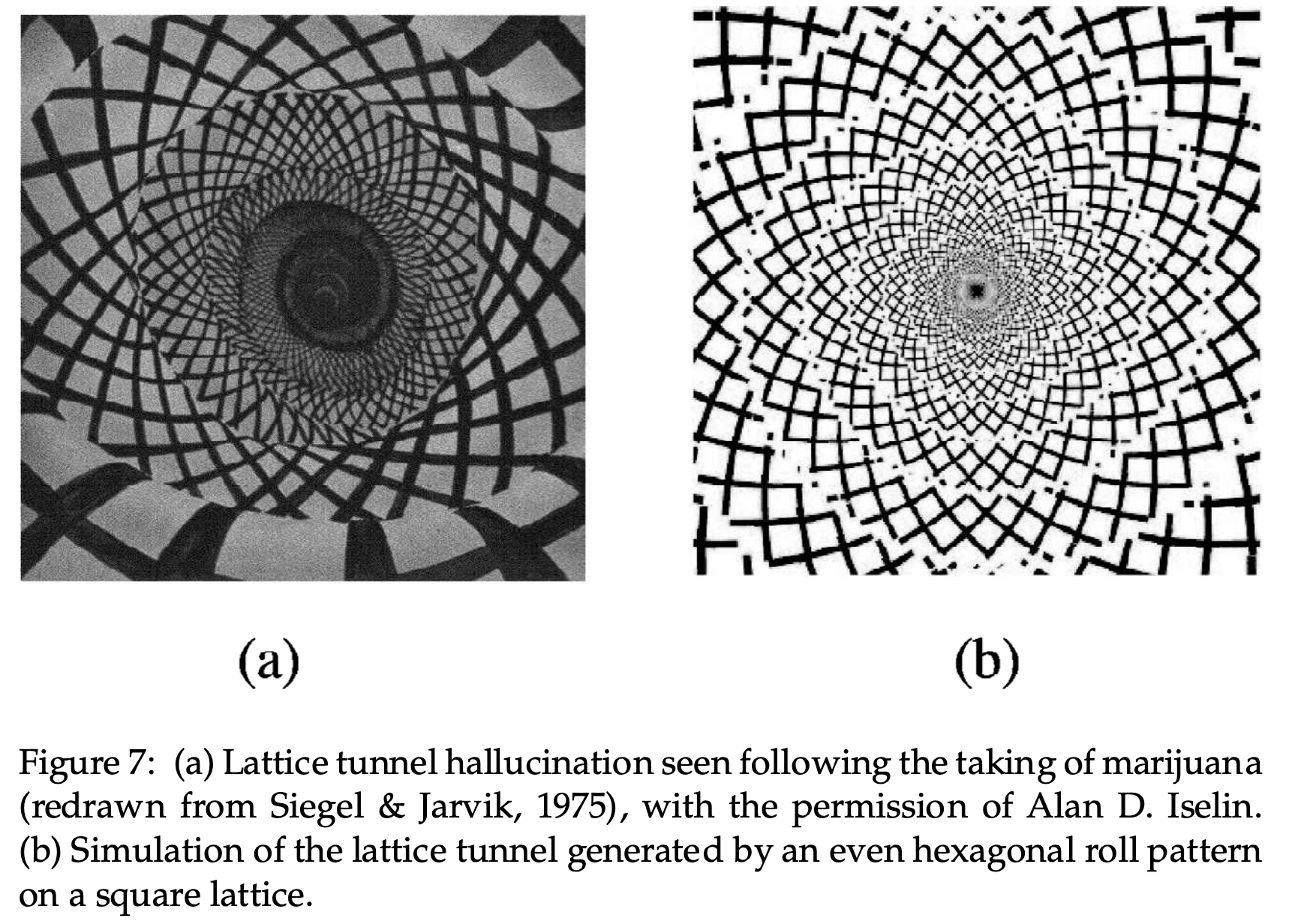 Figure 8: Modèles d'hallucination Modèles d'hallucination sous drogues: une modélisation mathématique permet de prédire leur forme.