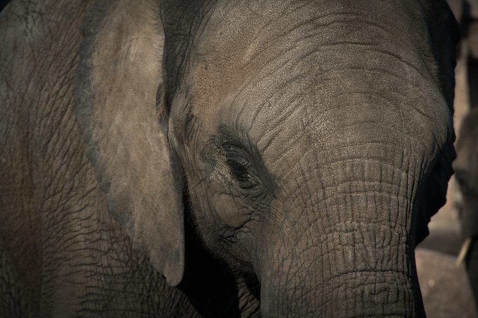 2017 07 17 elephant