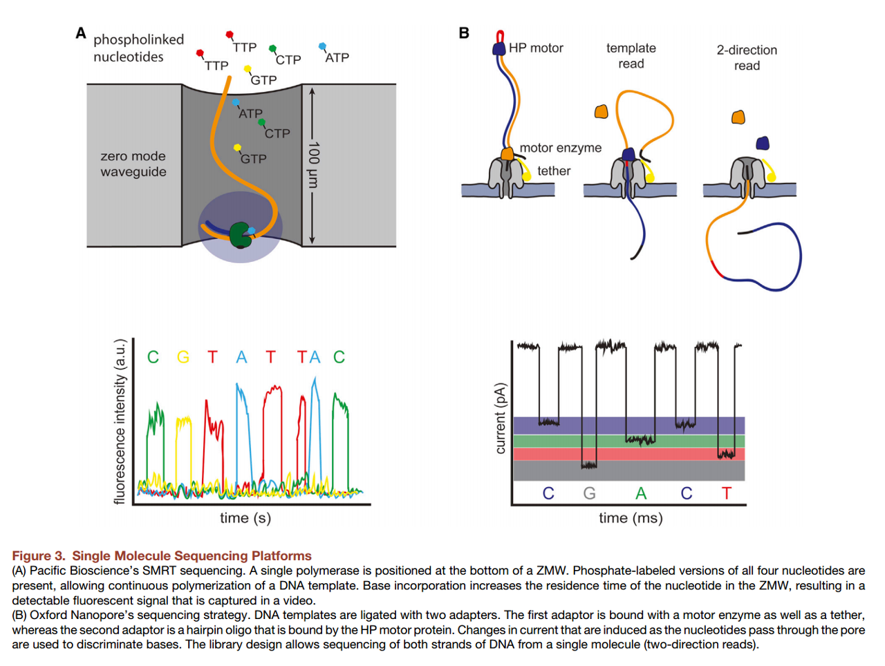 Of nanopores and isoforms < biochemistries