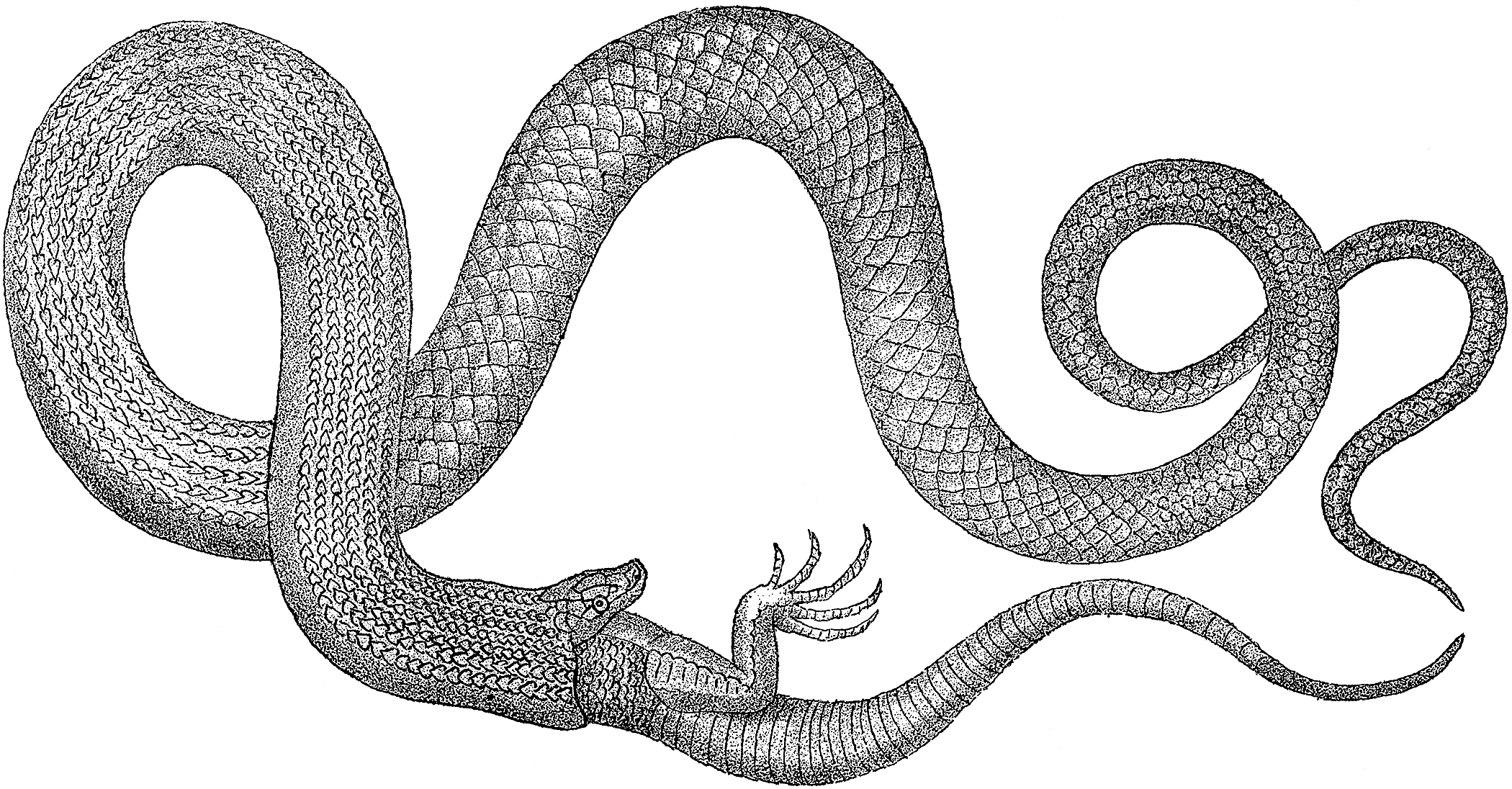 etching of snake eating a lizard