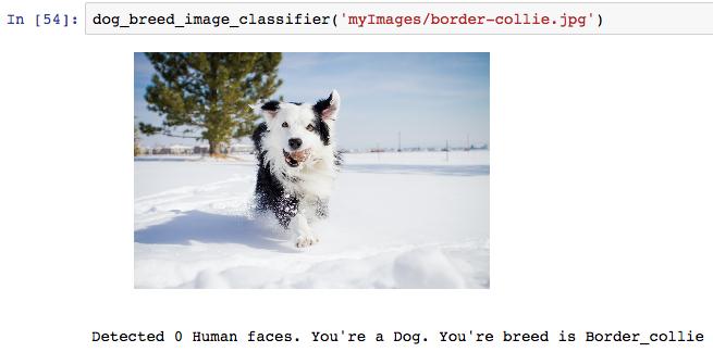 Udacity Dog Breed Project