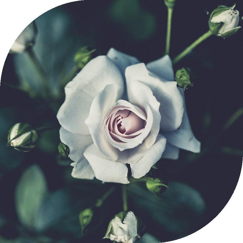 flower2_leaf.jpg