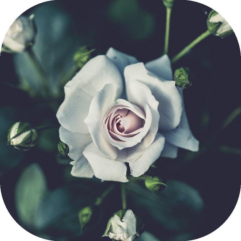 flower2_r0.5.jpg