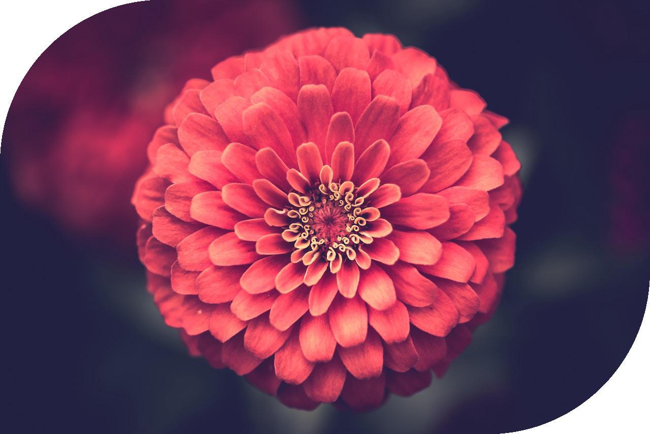 flower_leaf.jpg